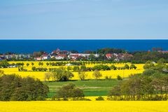 Canola Fields On The Baltic Sea Coast In Kuehlungsborn, Germany Stock Images