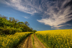 Canola fields in remote rural area Stock Photo