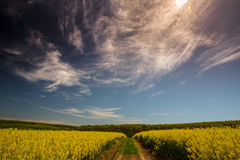 Canola fields in remote rural area Stock Images