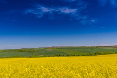 Canola fields in remote rural area Royalty Free Stock Photo