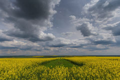 Canola fields in remote rural area Stock Photos