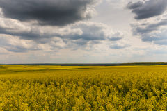 Canola fields in remote rural area Royalty Free Stock Image