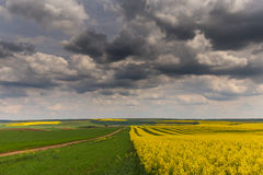 Canola fields in remote rural area Royalty Free Stock Photos