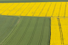 Canola fields in spring Royalty Free Stock Photography