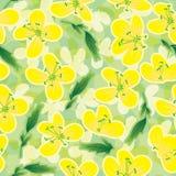 Canola florece Pattern_eps inconsútil Fotografía de archivo libre de regalías