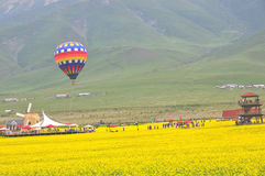 Canola flower and hot air balloon. Here is the Chinese Qinghai Province MenYuan County Royalty Free Stock Image
