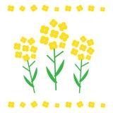 Canola Flower Illustration. Canola Flower Concept In Flat Style. Canola Flowers Symbols Royalty Free Stock Images