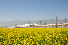 Canola flower and train. High-speed train from canola flower through to the inside, here it is the China Qinghai door source County Stock Photo