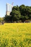 Canola flowers at zhonglun park Royalty Free Stock Image