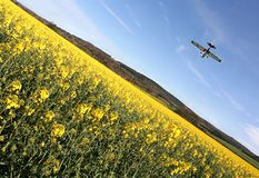 Canola Fly Over. Light Aircraft banks over stunning yellow crop field on a bright spring day in England. Taken on a wide Angle Lens stock image