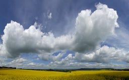 Canola, gebied en wolken Stock Fotografie