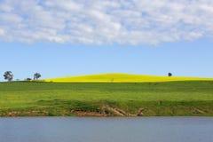 Canola-Hügel Cowra Lizenzfreie Stockfotografie