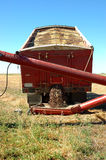 Canola Harvest and Red Truck. A red grain truck dumps recently harvested canola grain into red auger Royalty Free Stock Images