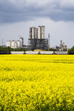 Canola and industrail palnt Stock Photography