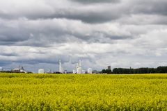 Canola and industrail palnt. Canola field with a industrial plant off in the back ground Royalty Free Stock Photo