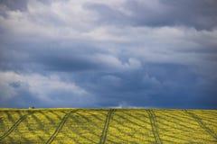 Canola kwiatu pole na gospodarstwie rolnym w Caledon, Zachodni przylądek, Południowa Afryka obrazy stock