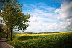 Canola Landschaft lizenzfreie stockbilder