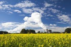 Canola o senape giallo su un campo Immagini Stock