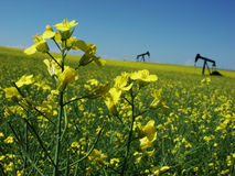 Canola and Oil Pumps Stock Image