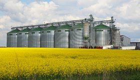 Canola oil silo Stock Image