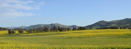 Canola pola krajobraz Zdjęcia Royalty Free