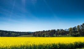 Canola pola przy Biltmore fotografia stock