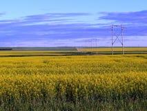 Canola pole blisko Lumsden Saskatchewan Zdjęcie Royalty Free