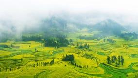 Canola pole, rapeseed kwiatu pole z ranek mgłą w Luoping zdjęcia royalty free