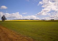 Canola or Rape Fields in the Mount Barker, Albany, Denmark area of South West Australia. Landscape royalty free stock images
