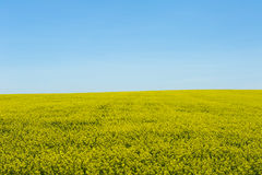 Canola/rapeseed field in Canada Stock Photo