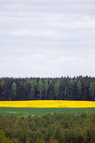 Canola (rapeseed) field and forest landscape stock photos