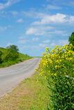 Canola by road Stock Image