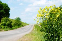 Canola by road Royalty Free Stock Photos