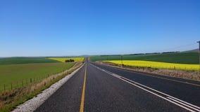Canola road Stock Photography