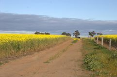 Canola, rolny ślad, stara rolna jata obrazy stock