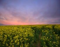 Canola stellt Sonnenaufgang auf Stockfotografie