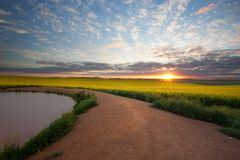 Canola Sunrise Stock Photography
