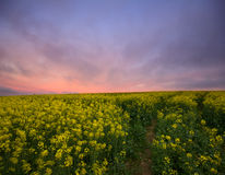 Canola sunrise landscape fields Stock Photography