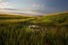 Canola Valley. Image of a canola farm in the Western Cape in South Africa Stock Images