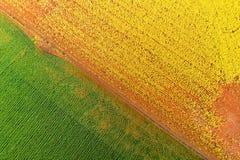 Canola-Weizenzusammenfassungsantenne stockfoto