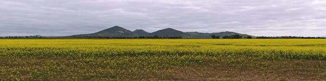 Canola and You Yangs Stock Photo