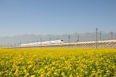 Canolabloem en trein Stock Foto