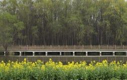 Canolablume durch den Fluss lizenzfreies stockbild