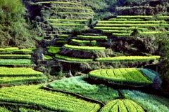 canolaen fields backen Royaltyfri Fotografi