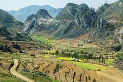 Canolafeld auf Berg von ethnischen Minderheiten Lizenzfreies Stockbild