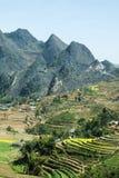 Canolafeld auf Berg von ethnischen Minderheiten Lizenzfreies Stockfoto