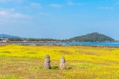 Canolafeld bei Seongsan Ilchulbong, Jeju-Insel, Südkorea stockbilder