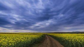 Canolafeld im ländlichen Gebiet Stockfotografie