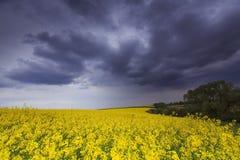 Canolafeld im ländlichen Gebiet Lizenzfreie Stockfotos