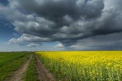 Canolafeld im ländlichen Gebiet Lizenzfreies Stockfoto